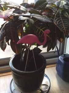 flamingogz