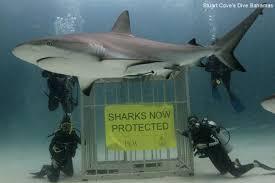 SharkSanctuary